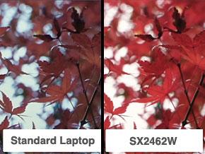 Standard Laptop / SX2462W