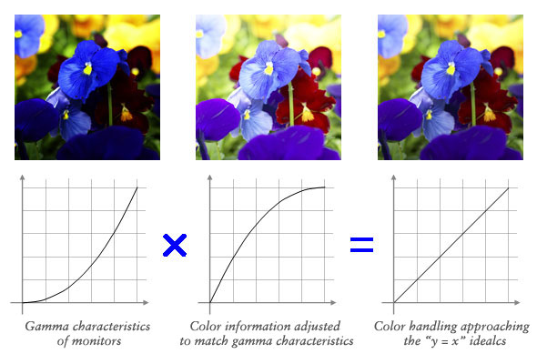 is the beauty of a curve decisive for color reproduction learning