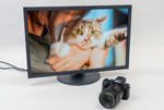 Adorable Kitties on an EIZO ColorEdge